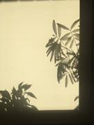 木漏れ日の 昼下がりの画像